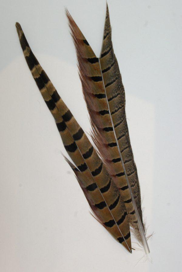 plumes de faisan